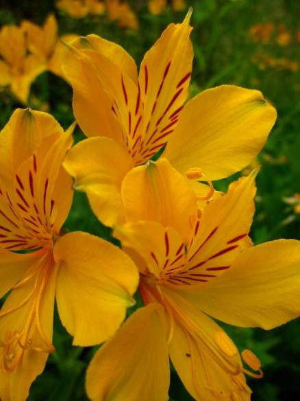 Para mí, una de las cosas que más que trae gozo es la naturaleza, y la belleza única de las flores
