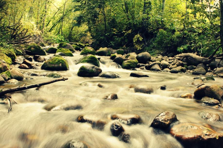 Paleo y sustentabilidad: Por qué importa cuidar el planeta