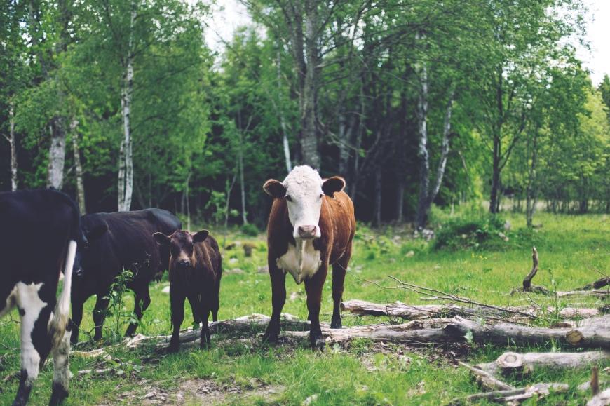 Paleo y sustentabilidad: Cómo el elegir tus carnes y pescados sabiamente es cuidar el planeta