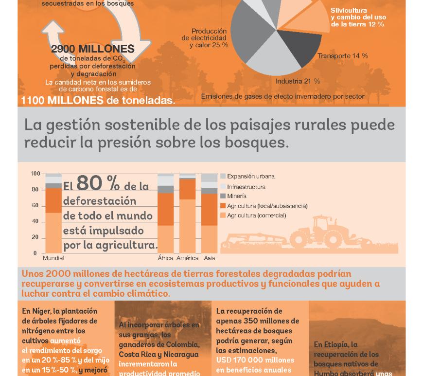 El importante papel de los bosques en desacelerar el cambio climático (