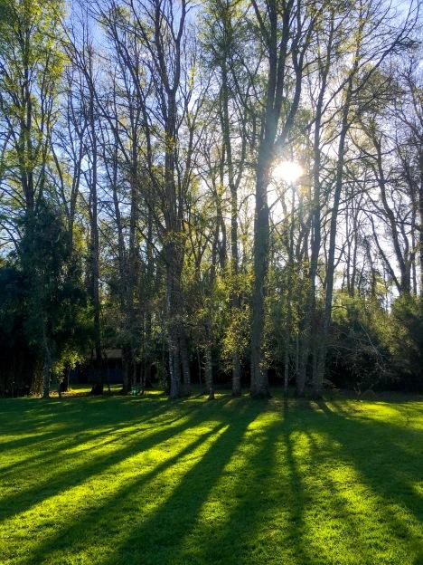 el importante papel de los bosques en desacelerar el cambio climático